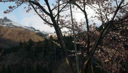 『桜』湯沢編♪
